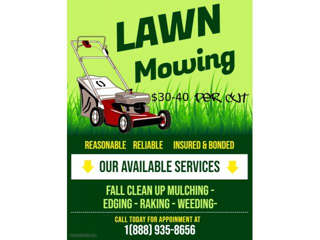 Need Your Lawn Cut New York NY New York